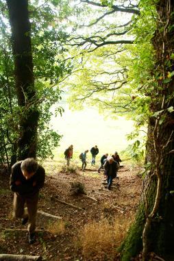 Brineddin-Wood---Chapel-Lawn-11-10-15-054